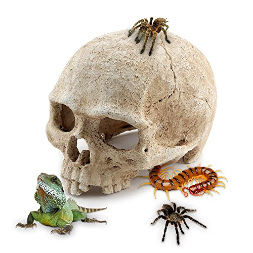 Aquarium Resin Skull, for Aquarium Decoration Reptile House Cave Family Daily Decoration