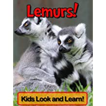 Lemurs! Learn About Lemurs and Enjoy Colorful Pictures - Look and Learn! (50+ Photos of Lemurs)