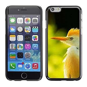 Caucho caso de Shell duro de la cubierta de accesorios de protección BY RAYDREAMMM - Apple iPhone 6 Plus 5.5 - Summer Sun Bird Tropical