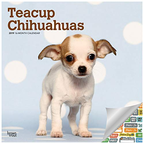 Teacup Chihuahuas Calendar 2019 Set - Deluxe 2019 Teacup Chihuahuas Wall Calendar with Over 100 Calendar Stickers (Teacup Chihuahuas Gifts, Office Supplies)