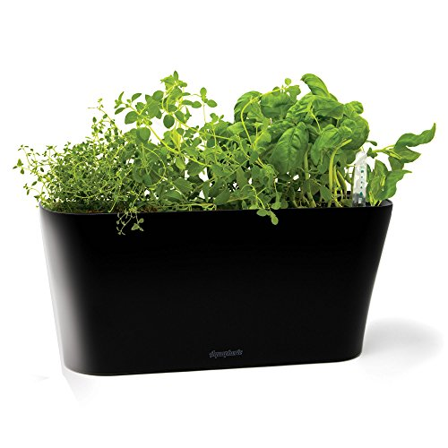 Aquaphoric Herb Garden Tub - Self Watering Passive Hydroponic Planter + Fiber Soil, Keeps Indoor Kitchen Herbs Fresh and Growing for Weeks on Your Home Windowsill. Compact, Attractive and (Herb Window)
