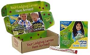 Insect Lore Live Baby Ladybug Larvae - Ladybug Growing Kit REFILL - SHIP NOW