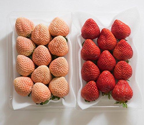 南国フルーツ 福岡産 紅白いちご あまおう&淡雪 2パック (各1パック)送料無料¥3,980