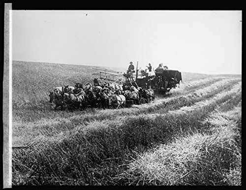 Vintography 16 x 20 Gallery Wrapped Frame Art Canvas Print Western farming 1917 National Photo Co 68a by Vintography