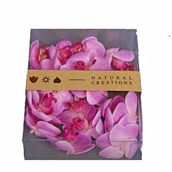 Amazon De Kunstblumen Orchideenbluten Phalaenopsis Enna Rosa