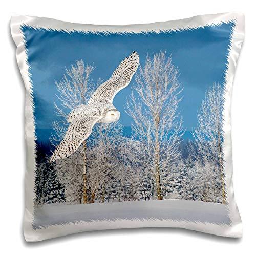 3dRose Danita Delimont - Owls - Canada, Ontario. Female snowy owl in flight. - 16x16 inch Pillow Case -