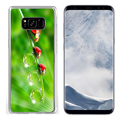 MSD Samsung Galaxy S8 Plus Clear case Soft TPU Rubber Silicone Bumper Snap Cases IMAGE of ladybug grass summer nature insect close-up spring environment garden plant meadow leaf ladybird dew -