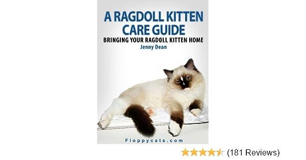 A Ragdoll Kitten Care Guide: Bringing Your Ragdoll Kitten