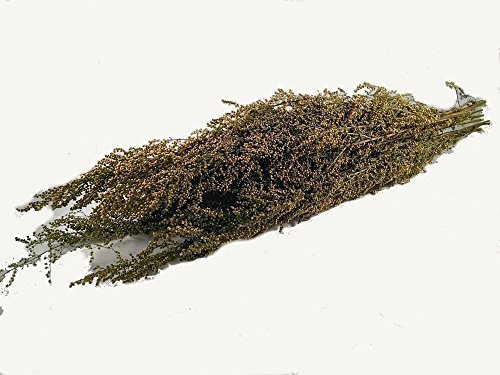Hanging Dried Herbs (Natural Preserved SWEET ANNIE herb bunch- naturally fragrant herbal scent~ perfect primitive decoration herb preserved and sold per bunch decorative- fall 2017 harvest. Free Shipping!)