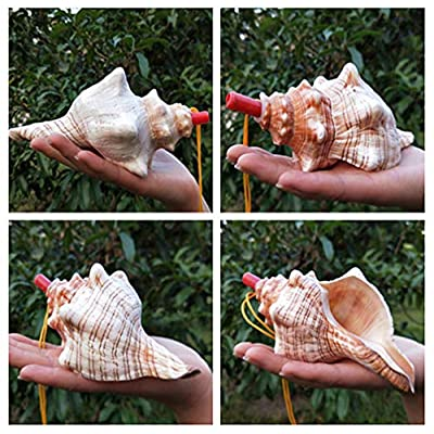 Beautymap Natural Conch Whistle/Big Conch/Snail Horn/Corner Conch/Shell Crafts Creative Gift Children's Toy Blow -Red-Spinning Snail 4'': Toys & Games