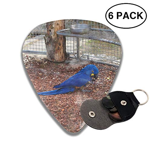Animal Hyacinth Macaw Birds 3D Color Printed Guitar and Bass Pick Gift Brass -6pcs