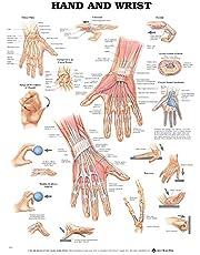 Hand & Wrist Chart: (laminated)