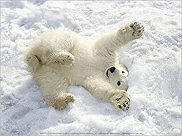 1art1 49949 Eisbären Eisbär Baby Im Schnee Alaska Poster