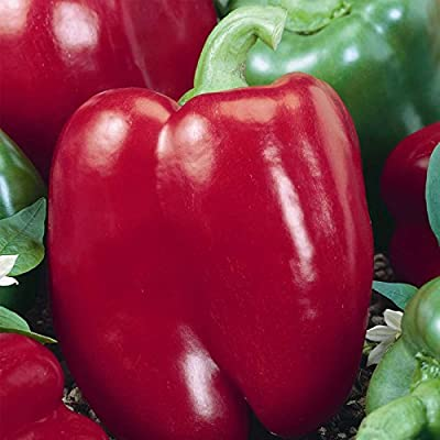 Big Red Sweet Pepper Garden Seeds - Non-GMO, Heirloom Vegetable Gardening Seed