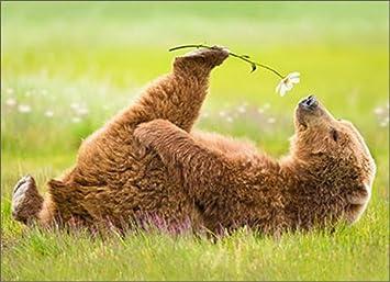 Amazon.com : Bear Smells Flower Funny Valentine's Day Card ...