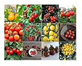 buy David's Garden Seeds Collection Set Tomato Cherry NEP933V (Multi) 12 Varieties 600 Seeds (Non-GMO, Open Pollinated, Heirloom, Organic) now, new 2020-2019 bestseller, review and Photo, best price $36.95