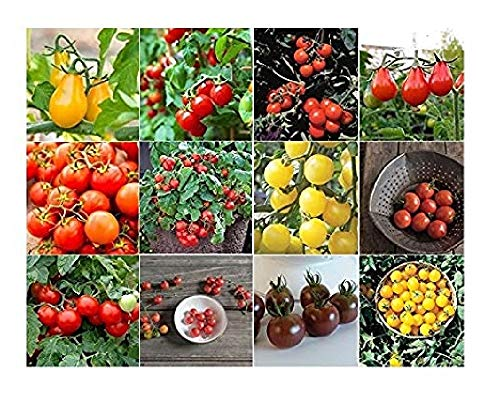 Grow Cherry Tomatoes Seeds - David's Garden Seeds Collection Set Tomato Cherry NEP933V (Multi) 12 Varieties 600 Seeds (Open Pollinated, Heirloom, Organic)