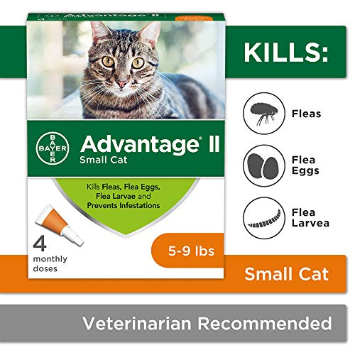 Flea Prevention for Cats