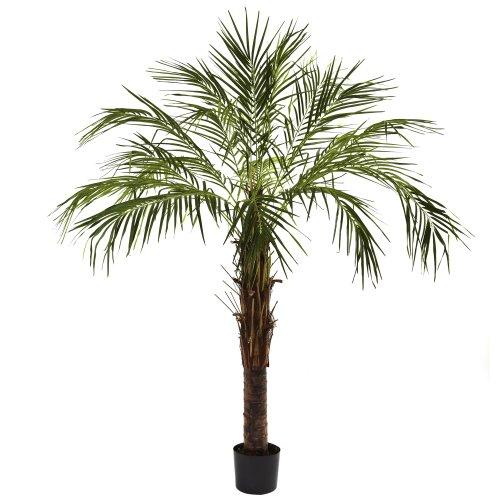 Nearly Natural 5366 Robellini Palm Tree, 6-Feet, Green