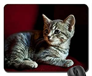 Are We Done Yet Cute Cool Decorative Design Animal Cat Mousepad Rainbow Designs
