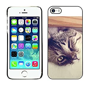 YOYO Slim PC / Aluminium Case Cover Armor Shell Portection //Cool Cat //Apple Iphone 5 / 5S