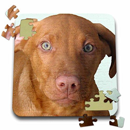 3dRose Sandy Mertens Dog Designs - Vizsla Puppy - 10x10 Inch Puzzle (pzl_48744_2)