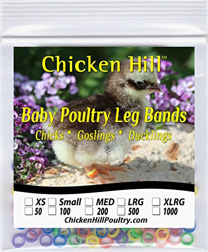 Chicken Hill Baby Poultry Leg Bands 3/16 Small Chick Size 3 ()