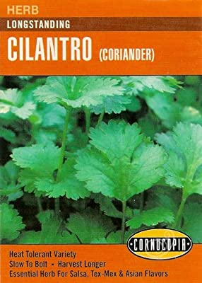 Heirloom Cilantro (Coriander), Longstanding