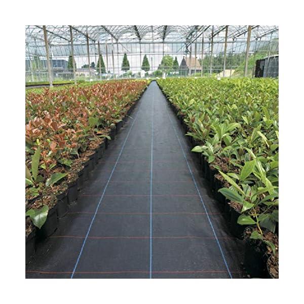 Piantagione di piante per il controllo delle erbacce - Barriera erbaccia per copertura suolo - Ecologica per il… 1 spesavip