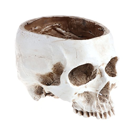 Misright Human Skull Head Design Flower Pot Planter Container Craft ornaments Home Decor