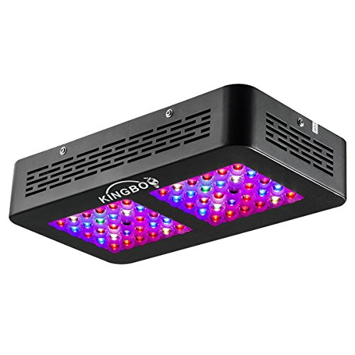 KINGBO 300W LED Grow Light Full Spectrum Double Switch LED Plant Light for Greenhouse Hydroponic Indoor Plants Veg and Bloom (12band) by KINGBO