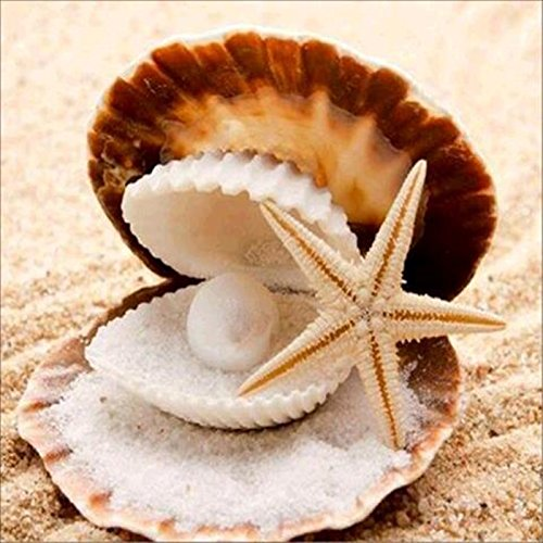 (DIY 5D Diamond Painting by Number Kits, Crystal Rhinestone Diamond Embroidery Paintings Pictures Arts Craft for Home Wall Decor (Starfish + Seashells 6425, 30x30cm))
