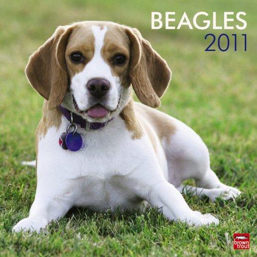Beagles 2011 Square 12X12 Wall Calendar (Multilingual - 2010 Calendar Beagle