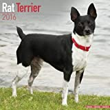 Rat Terrier Calendar - Breed Specific Rat Terrier Calendar - 2016 Wall calendars - Dog Calendars - Monthly Wall Calendar by Avonside