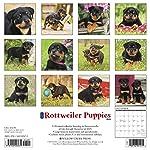 Just Rottweiler Puppies 2020 Wall Calendar (Dog Breed Calendar) 3