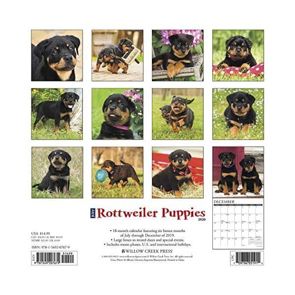 Just Rottweiler Puppies 2020 Wall Calendar (Dog Breed Calendar) 1
