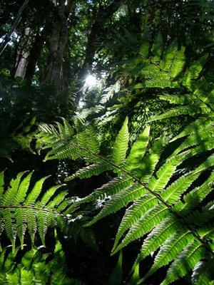 Rain Forest parfumée à l'huile de phéromone (Roll On) - Homme