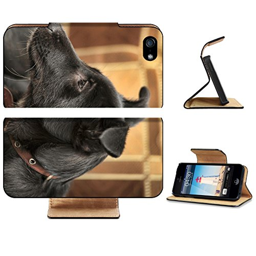 Apple iPhone 5 5S Flip Case Black with gray puppy purebred crossbreed IMAGE 33757641 by MSD Customized Premium Deluxe Pu Leather generation Accessories HD Wifi Luxury Protector