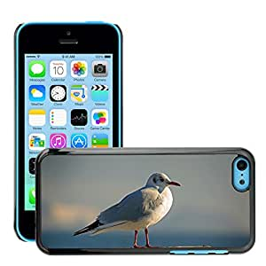 Hot Style Cell Phone PC Hard Case Cover // M00114897 Seagull Bird Sky Fly Water Bird // Apple iPhone 5C
