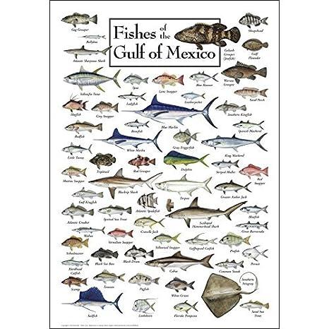 Peces De La Golfo De México Regional Peces Póster Amazones Hogar