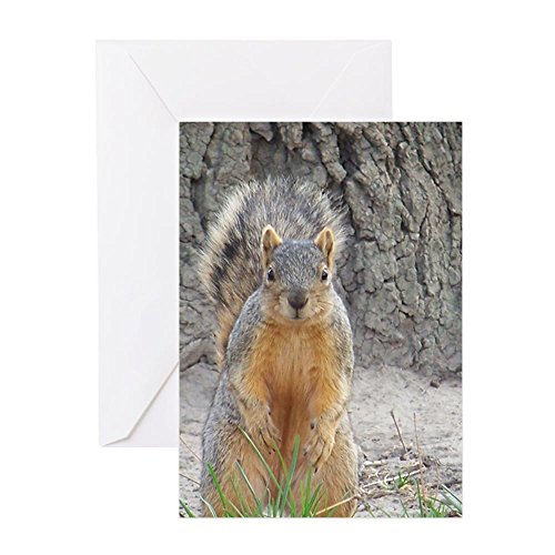 CafePress - Squirrel Greeting Cards - Greeting Card (10-pack), Note Card with Blank Inside, Birthday Card Matte