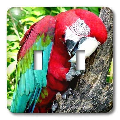 3dRose lsp/_1027/_2 Green wing Macaw Double Toggle Switch
