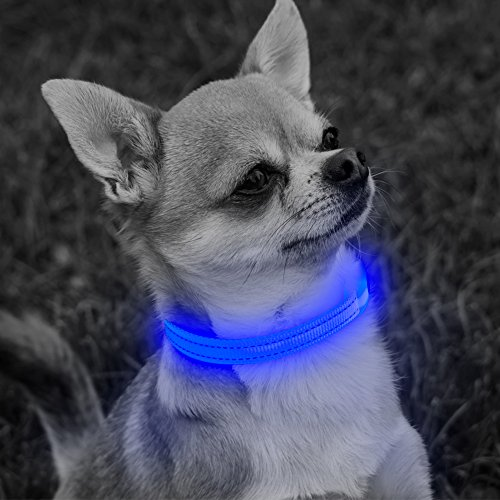 (Vizbrite LED Cat Dog Collar, Nylon Pet Collar Night Safety Light UP Flashing Glow Necklace Collar for Small Breed, Puppy & Cat (XS, Blue))