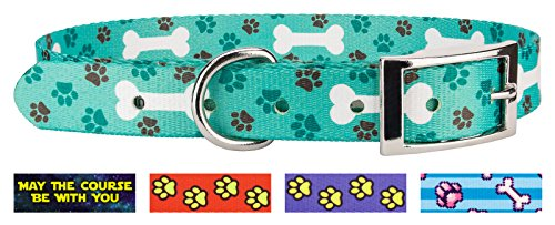 Country Brook Design Oh My Dog Traditional Dog Collar - (Top Paw Adjustable Dog Collar)