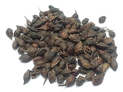 Sugar Maple Tree Seed Pack, Acer Saccharum, Northern USA Source Dewinged, 5