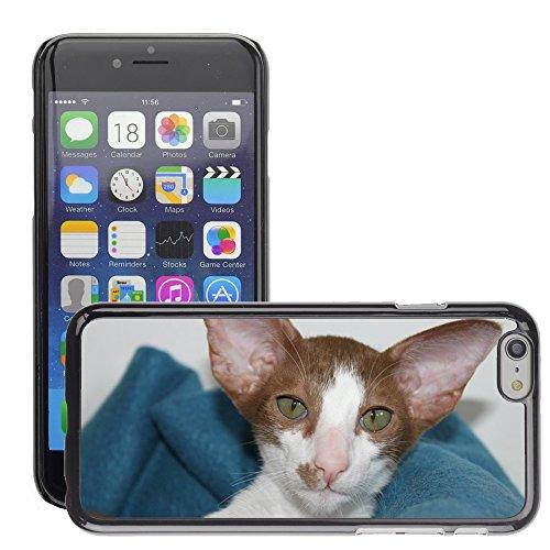 """Just Phone Cases Hard plastica indietro Case Custodie Cover pelle protettiva Per // M00128196 Cat Cat Kitten Curieux bébé // Apple iPhone 6 PLUS 5.5"""""""
