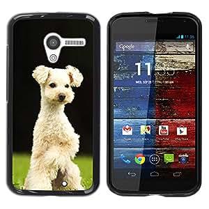 Vortex Accessory Hard Protective Case Skin Cover For Motorola Moto X ( 1St Gen Only ) - Lakeland Terrier Sealyham Puppy Dog