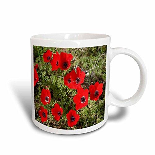 3dRose Red Poppy Anemone, Spanish Marigoldanemone, Flower, Ceramic Mug, 11-Oz