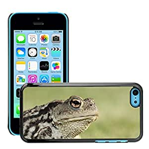 Just Phone Cases Slim Protector Hard Shell Cover Case // M00128213 Frog Toad Eyes Amphibian Head // Apple iPhone 5C