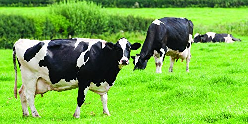 Nature's Seed PB-SADC-0.5-A 0.5 Acre South-Atlantic Transitional Dairy Cow Pasture Blend